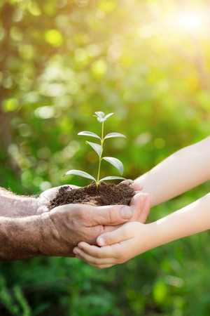 hand holding plant: Senior man and baby holding young plant in hands against spring green background. Earth day concept Stock Photo