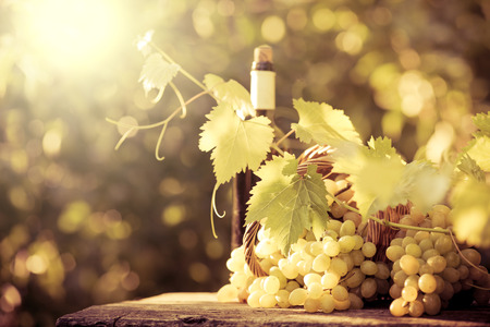 Botella de vino y uvas de la vid en otoño Foto de archivo - 44340698