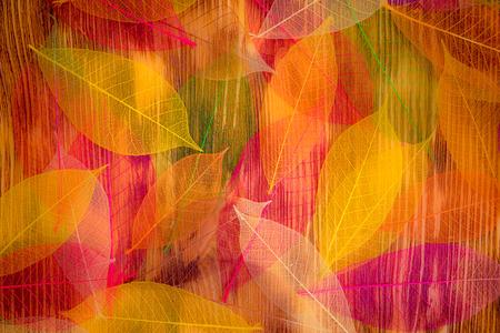 abstraktní: Podzimní listí textury. Abstraktní pozadí