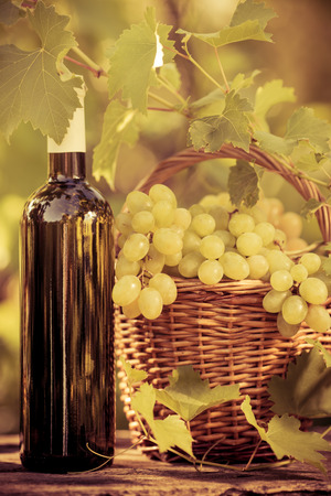 grapes wine: Wine bottle and grapes of vine in autumn