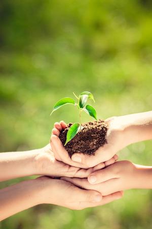 子供たちの手で緑の春の背景に若い植物を保持します。地球日生態学休日コンセプト 写真素材