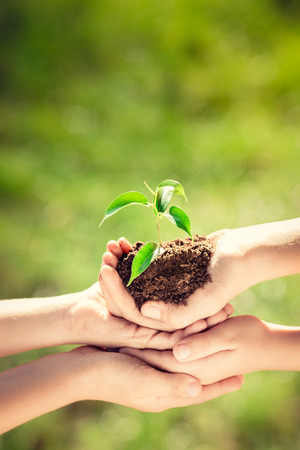 earth friendly: Children holding young plant in hands against green spring background. Earth day ecology holiday concept