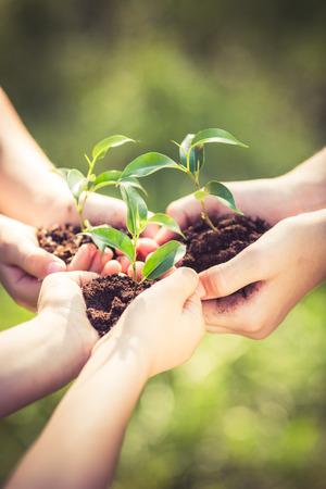 Die Leute halten junge Pflanze in den Händen gegen den grünen Frühling Hintergrund. Tag der Erde Ökologie Urlaub Konzept