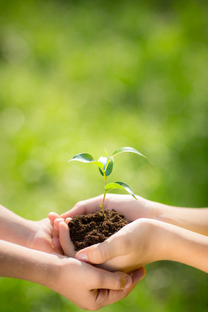 small plant: Children holding young plant in hands against green spring background. Earth day ecology holiday concept