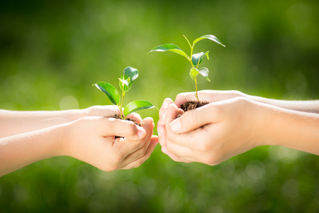ecology concept: Children holding young plant in hands against green spring background. Earth day ecology holiday concept