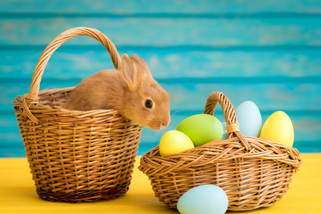 Easter bunny and basket of eggs. Spring holidays concept Stockfoto