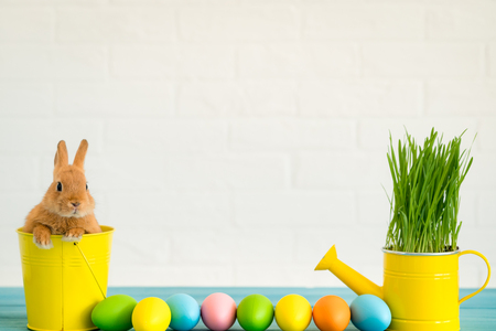 Easter bunny and basket of eggs. Spring holidays concept Stock Photo