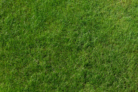 Green lawn background. Spring concept. Top view