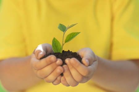 Child holding young green plant in hands. Earth day spring holiday concept. Foto de archivo