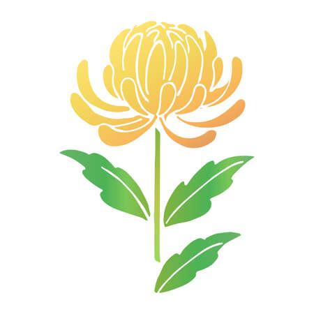 Illustration material of yellow chrysanthemum flower