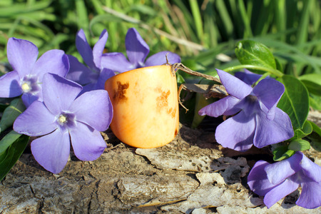 frippery: Handmade bone yellow ring with wood violet in spring on the nature background