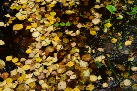 occurred: Fallen leaves on the water surface dragonfly fall occurred
