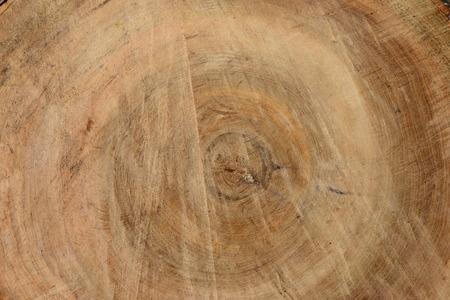 tilo: Fondo de la textura de una madera de tilo Foto de archivo