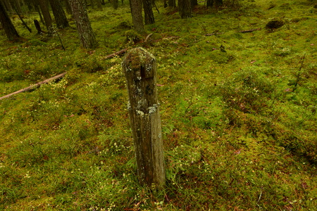 milepost: On the overgrown forest road remained milestone with pre-revolutionary times Stock Photo