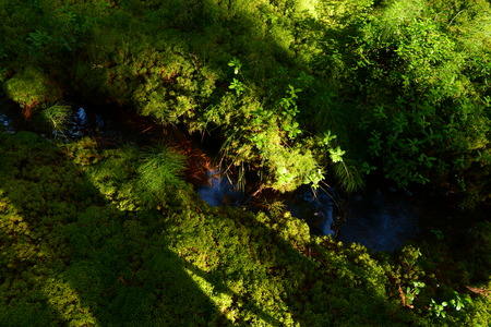 pine creek: Shadows and sunlight on ground cover of green moss at the forest creek