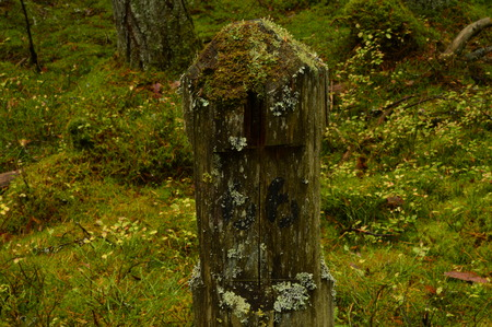 milepost: Milepost sixty-sixth hole in the woods overgrown with moss is to revolutionary times in Russia