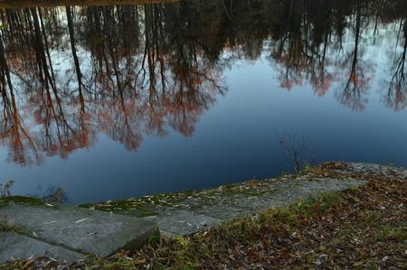 coastal city: The surface of the water reflects the coastal city park trees