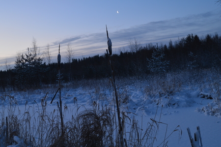 preceding: Nature in the wild forest under the moon at night in cold weather Stock Photo