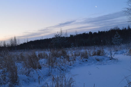 preceding: Winter forest under the moon in the clear cold sky Stock Photo