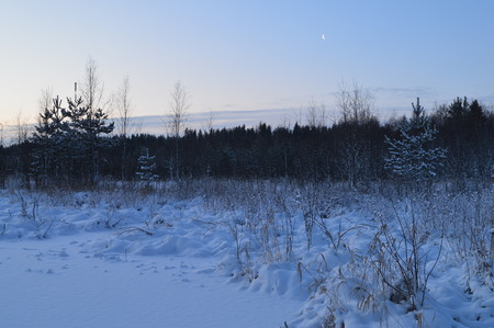 preceding: The cold winter nature white snow forest under the moon Stock Photo