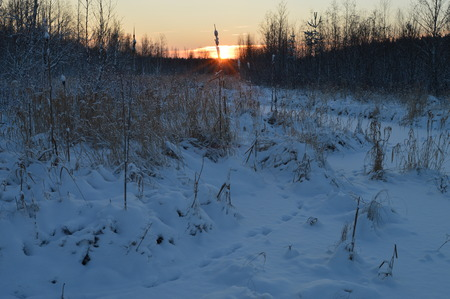 preceding: Lonely frozen winter reeds at sunrise in a forest river