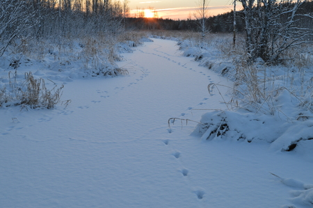 preceding: Animal footprints on white snow to the rising sun on the frozen forest river