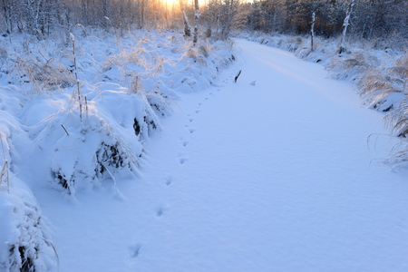 animal tracks: Forest snow-covered river animal tracks the rising sun