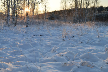 preceding: The snow cover of winter bluebell forest river at sunrise