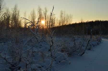 preceding: Cool the frozen winter forest in the morning at sunrise Stock Photo