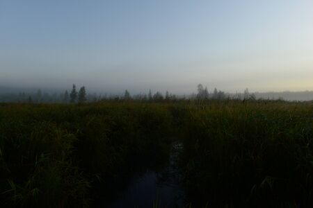 Autumn predawn foggy morning on a forest swamp   with large dense tall grass