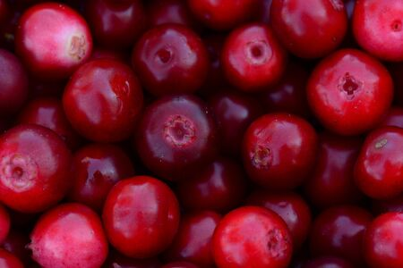 Heap lingonberries red bright colors ripe fresh fruits for a healthy eating