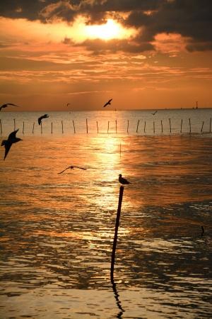 seagull on the pole at twilight, Bangpu recreation center, Thailand  photo