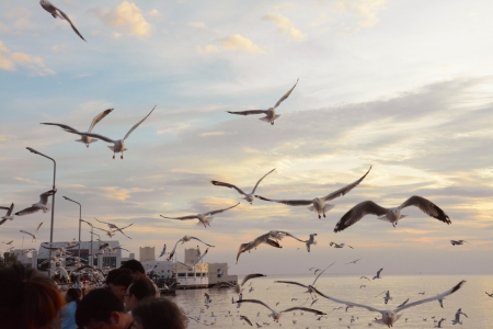 migrate: segulls turning around at twilight ,Bangpu recreation center,Thailand Stock Photo