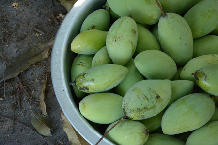 stell: green mangoes in stell basin