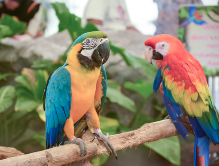 colorful Macaw in Pantanal photo