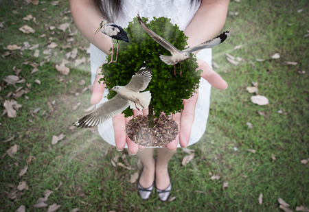 tree with bird in the hands ,concept of ecology photo