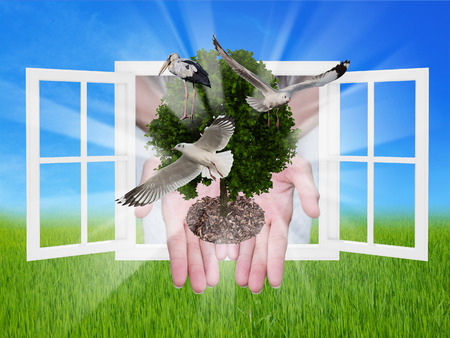 tree in the hands with window ,concept of ecology photo