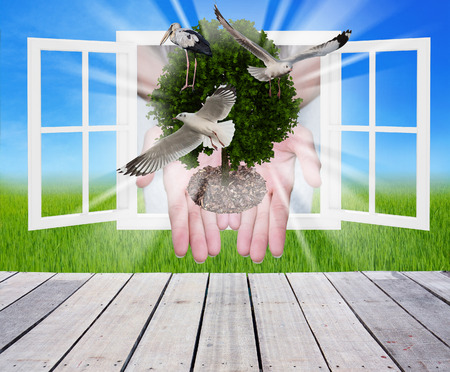 ecosavy: tree in the hands with window ,concept of ecology Stock Photo