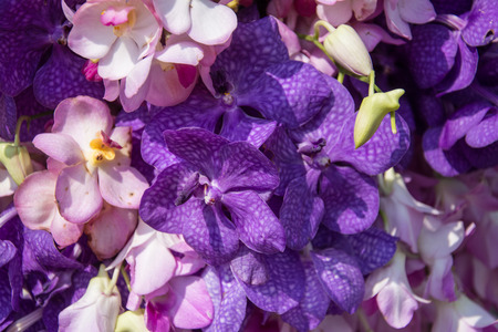 Beautiful  purle orchid flowers photo