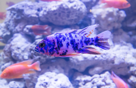 colorful fishes: colorful fishes swimming in aquarium