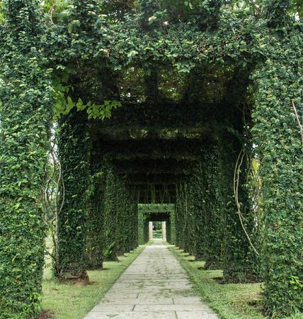Green archway in a garden.