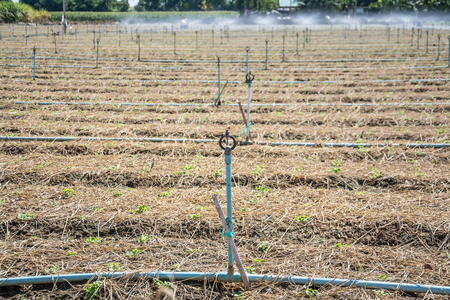 irrigating: Irrigation systems in agricultural land