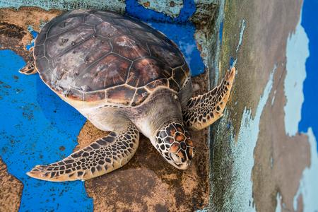 long lasting: turtle on concrete floor