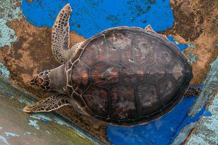 lasting: turtle on concrete floor