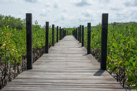 prong: Wood bridge in mangrove the way study nature at thung prong thong ,Rayong , Thailand Stock Photo