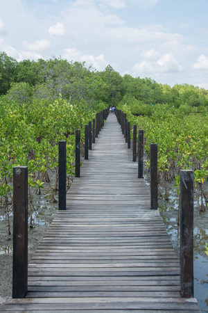 prong: Wood bridge in mangrove the way study nature at thung prong thong ,Rayong , Thailand Image ID:417966073 Stock Photo