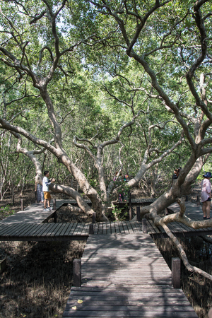 prong: Rayong, Thailand MAY 8, 2016:  wood bridge with big tree  in mangrove the way study nature at thung prong thong ,Rayong , Thailand Editorial