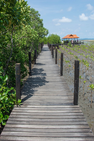 prong: Wood bridge in mangrove the way study nature at thung prong thong Stock Photo
