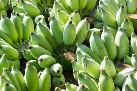 unripened: green, market, closeup, diet, asia, bunch, health, food, organic, healthy, fruit, fresh, nature, asian, banana, crop, heap, nobody, agriculture, producing, arranged, healthy eating, stem, group, production, lush, nutrition, bunched, raw, vegetarian, natur Stock Photo