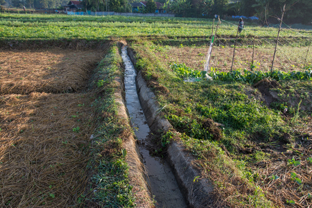irrigation channel with  green vegetable garden  in Pua ,the  northern of Thailand Stock Photo